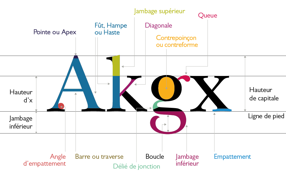 typographie : anatomie de la lettre